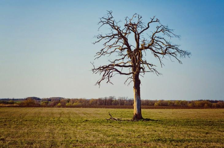 Dieing Tree